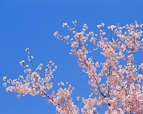 蒲田東口春の訪れ